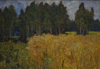 Пшеница колосится