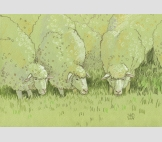 целая отара овец