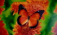 Бабочка 2