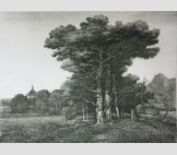 Деревья на холме