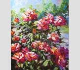 Красные розы в саду